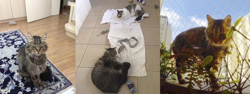 Francisquinho mural uti veterinária gato