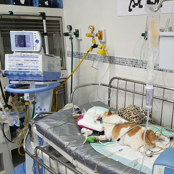 paciente uti nabuco ventilacao mecanica